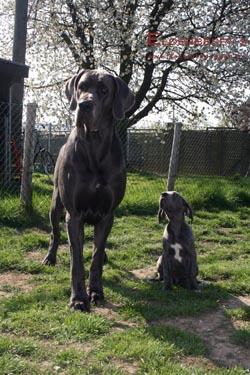 fünf monate alter schäferhund barfen